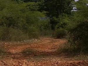 Медовый месяц на Карибах (порно фильм) - скриншот #11
