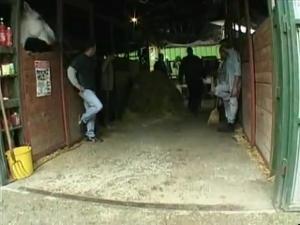 Темноволосая шлюшка приехала на ферму, чтобы обслужить уставших работников всеми щелками - скриншот #1